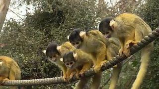 شاهد: الإحصاء في حديقة الحيوانات بلندن مهمةٌ سنويةٌ شاقة