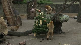 """Pranzo di """"Natale"""" per gli animali dello zoo di Berlino"""