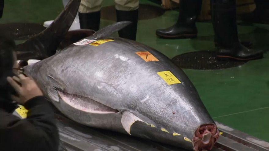 مزاد لبيع سمك تونة ذي الزعانف الزرقاء في العاصمة اليابانية طوكيو