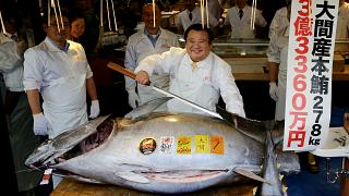 Endangered blue fin tuna gets record price at Tokyo fish market
