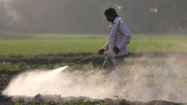 Ortadoğulu çiftçiler pestisit kullandıkları mahsülü Avrupa'ya satamıyor