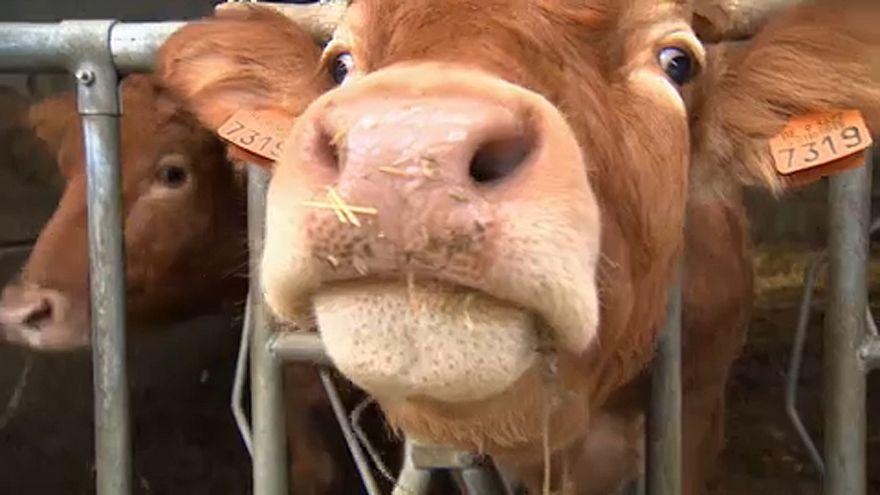"""Το... """"Eurogroup για τα ζώα"""" πιέζει την Κομισιόν"""