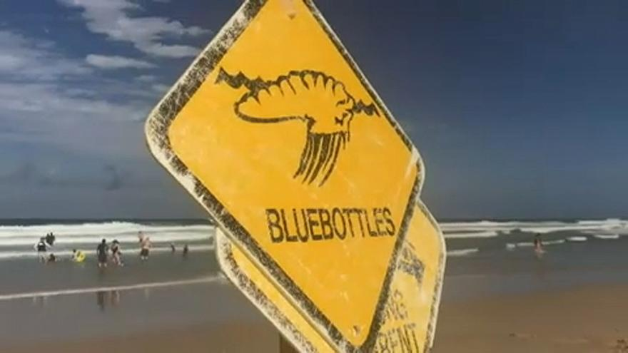 Több ezer embert csíptek meg medúzák Ausztráliában