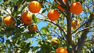 استخدام المبيدات في الزراعة في الشرق الأوسط يحرم محاصيله من التصدير