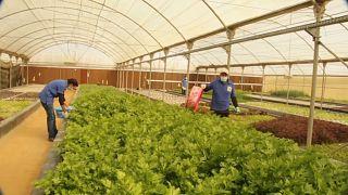 مصر: مزرعة تتولى زمام المبادرة لانتاج الأغذية العضوية في البلاد