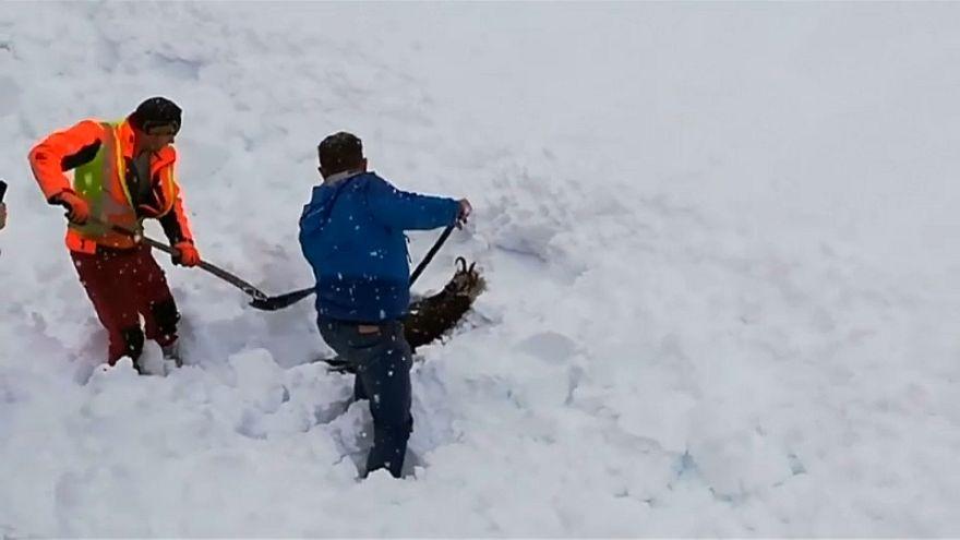 شاهد: إنقاذ ماعز محاصرة وسط الثلوج في النمسا