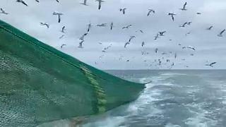 Brexit: a rischio la pesca libera nella Manica. La paura dei pescatori