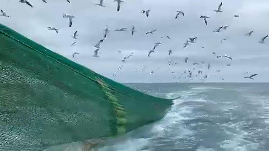 Brexit: kein Deal, kein Fisch