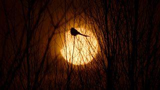 Erkek kuşlar parlak tüyle değil zekalarıyla dişileri etkiliyor | Araştırma