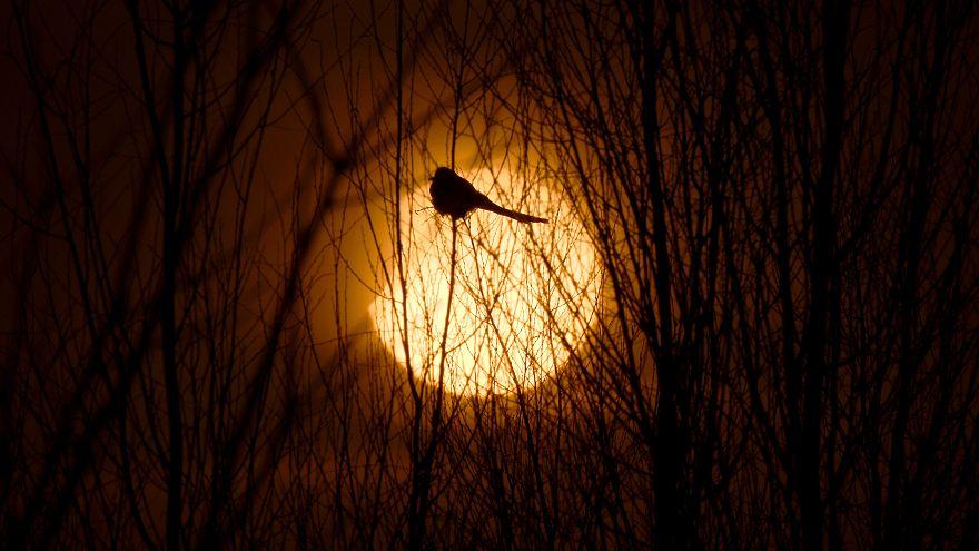 Erkek kuşlar parlak tüyle değil zekalarıyla dişileri etkiliyor - Araştırma