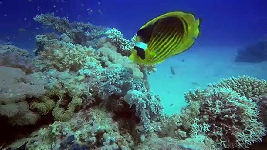 Océans : le réchauffement revu à la hausse
