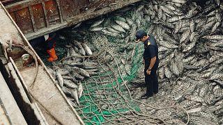 Pressão comercial europeia leva Tailândia a fazer pesca sustentável