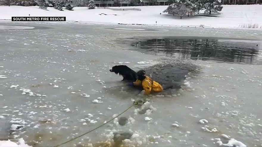 شاهد: إنقاذ كلب من بركة متجمدة في كولورادو الأمريكية