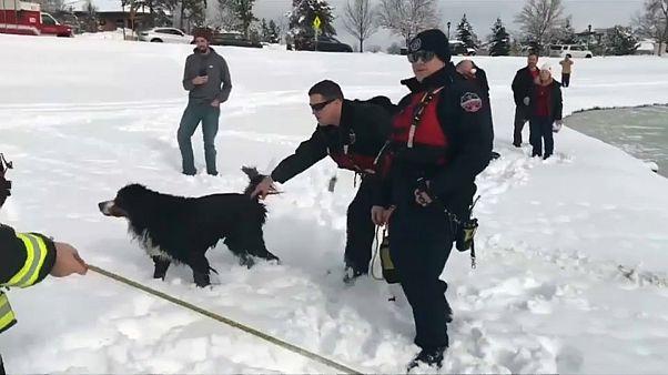 США: собаку спасли из замерзшего пруда