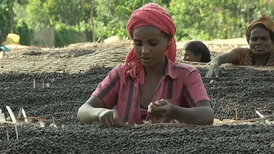 Café : les producteurs éthiopiens en crise
