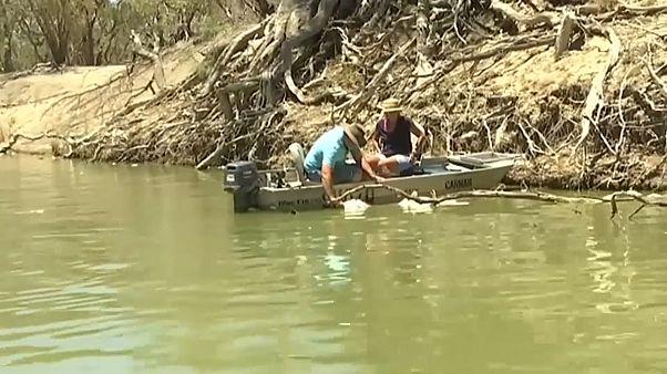 بعد نفوق نحو مليون سمكة في أستراليا.. السلطات تقرر ضخ الأكسجين في الأنهار والبحيرات