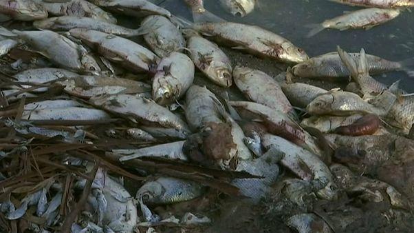 Video | Balık ölümlerine önlem için akarsu ve göllere oksijen pompalanacak