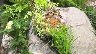 شاهد: ساعة نباتية لتصوير هشاشة الطبيعة