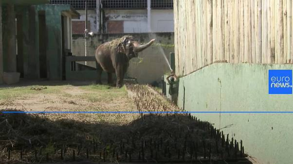 Rio zoo residents try to stay fresh during heatwave