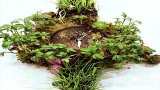 Moser Nature Watch: Doğa için vaktin daraldığını hatırlatan çevre dostu saat