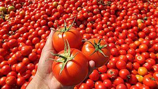 Soğandan sonra konserve domates, buğday, arpa, mısır ve pirinç ithaline sıfır gümrük
