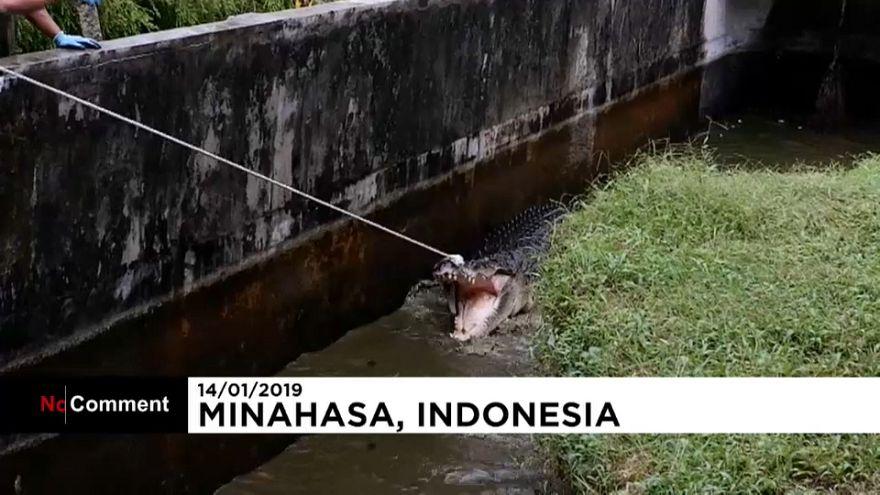 Kadın yiyen 4.5 metrelik katil timsaha 3 saat süren yakalama operasyonu
