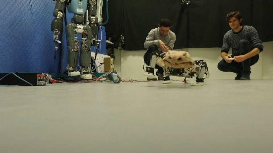 German researchers make robot to simulate pre-historic creature's movements