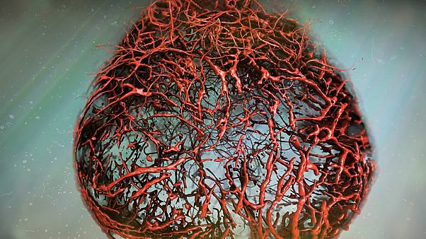 Bilim insanları ilk kez mükemmel kan damarları geliştirdi
