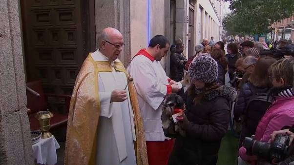 Animals given religious blessing in Spain