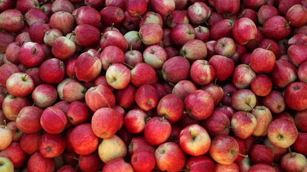 Óriási a túlkínálat Európában az almából