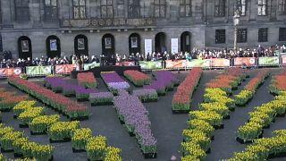 La tulipe à l'honneur aux Pays-Bas