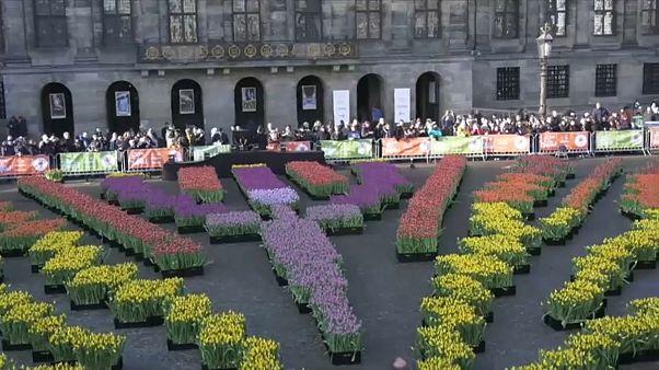 Kétszázezer virággal ünnepelték a tulipánok napját Hollandiában