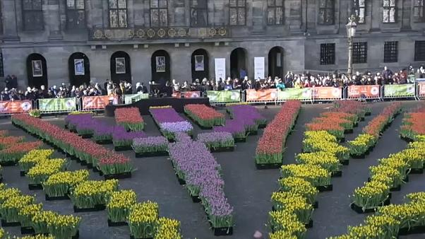 Nationaler Tulpentag in den Niederlanden