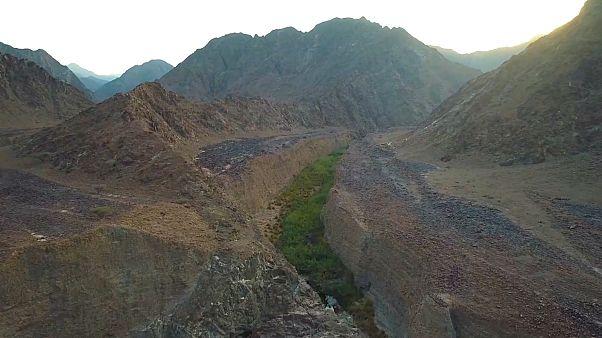 Endangered species find refuge in UAE national parks