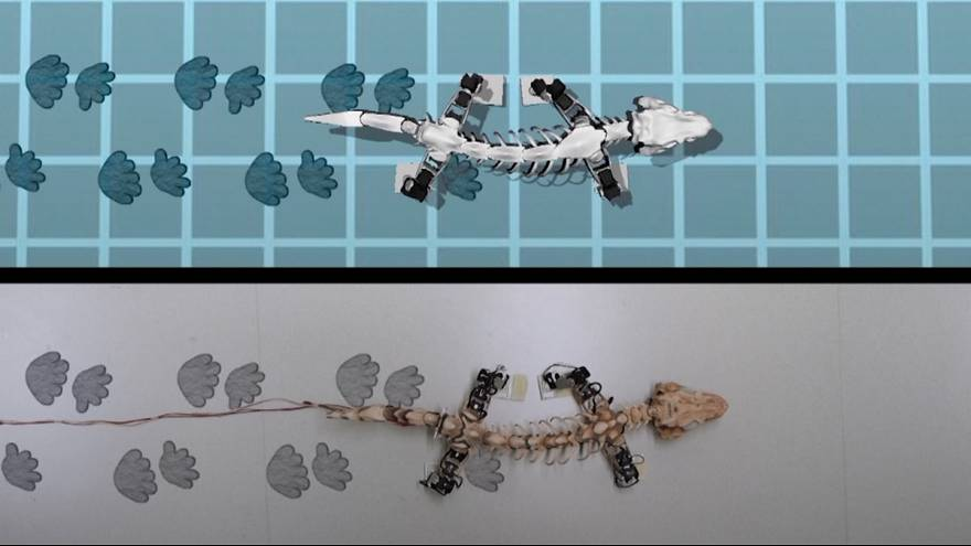 رباتی برای شبیهسازی پستانداران ماقبل تاریخ