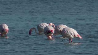 Кипр: время фламинго