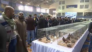 Pigeon keepers display exotic breeds at Egypt show