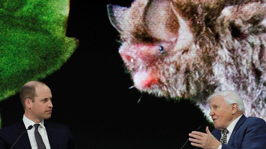 El príncipe Guillermo entrevista al naturalista Attenborough en el Foro Económico Mundial de Davos