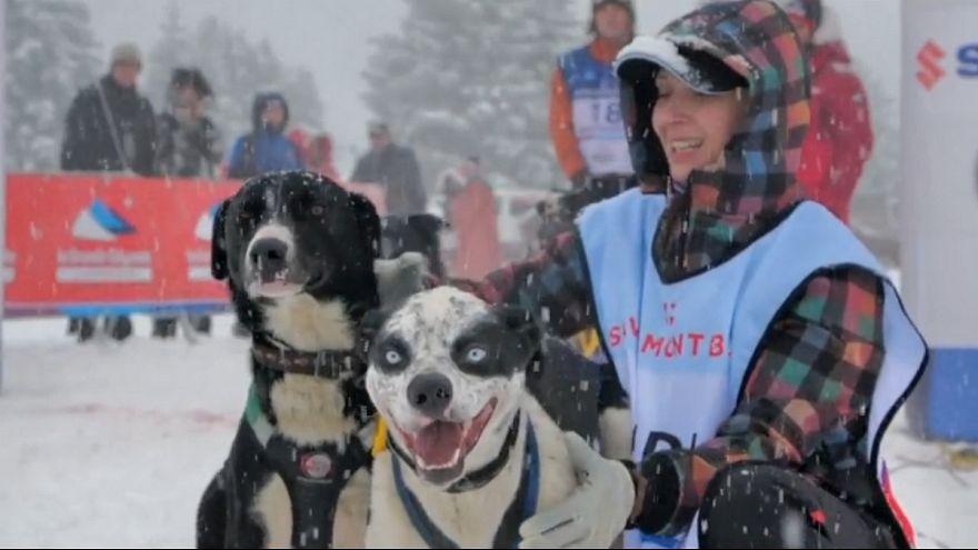 رقابت سورتمه سواری با سگ در کوههای آلپ فرانسه