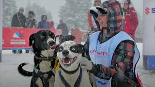 شاهد: 300 كلب يجرون زلاجات الثلج في سباق غراند أوديسي بجبال الألب