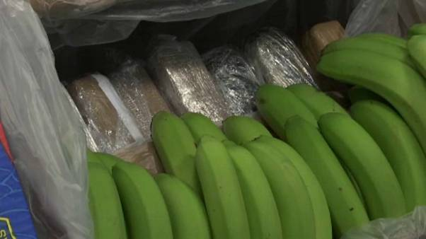 Banános dobozokba rejtették a rengeteg drogot