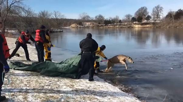 Firefighters rescue deer from icy lake in Kansas