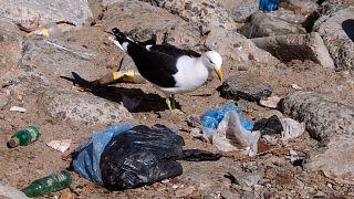 هر اروپایی در سال نیم تن زباله تولید میکند