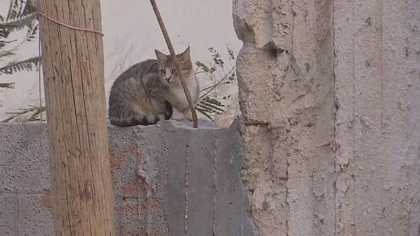 فيديو: فلسطينيون يتحدون الظروف وينقذون القطط والكلاب الضالة في غزة