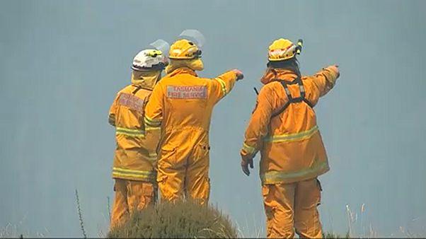 Tűz, hőség és halpusztulás Ausztráliában