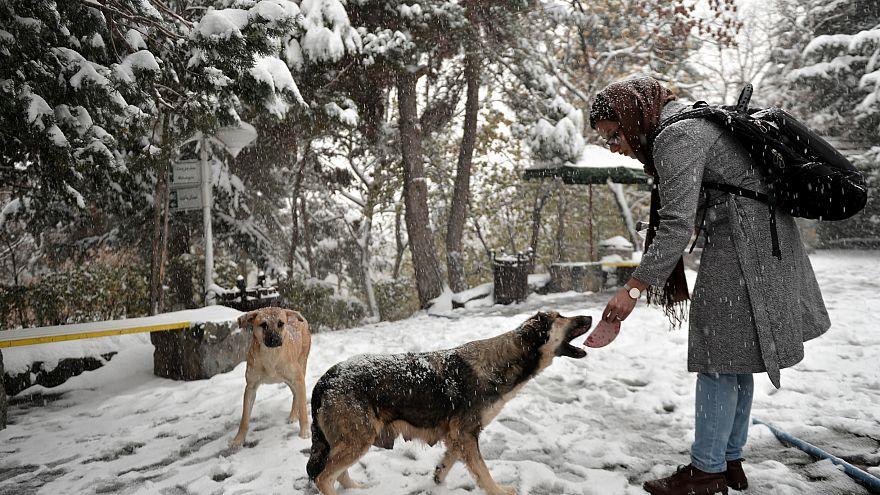 Tahran'da köpek gezdirmek yasaklandı