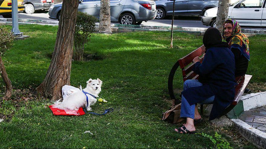 فرمانده نیروی انتظامی تهران: سگگردانی قدغن است
