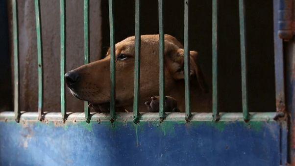 كلاب مصر الضالة: ظاهرة تتفاقم وتهدد الكلاب والسكان على حد سواء