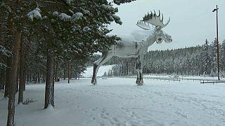 النرويج وكندا تتنافسان على لقب أكبر تمثال أيل في العالم