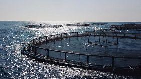 Óceáni aquakultúrák - az emberiség élelmiszertartaléka